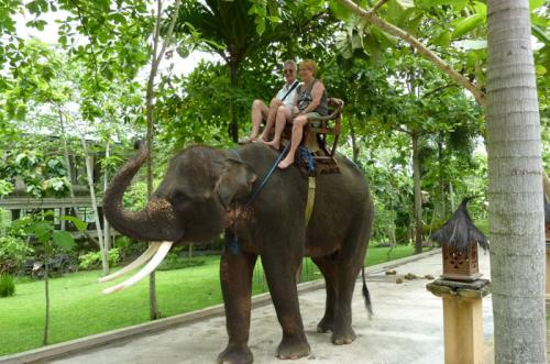 elephant-safari-park-bali-tour